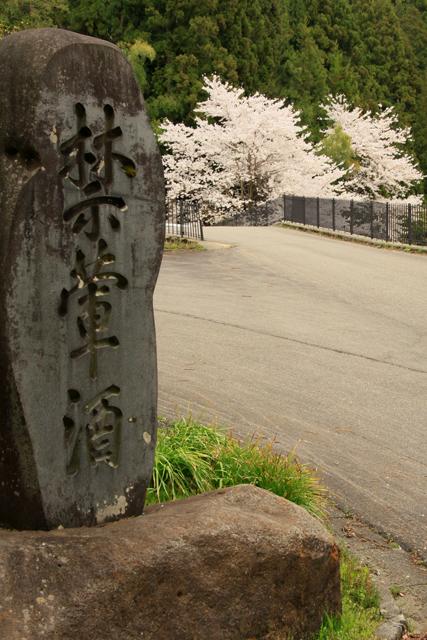 高城長禅寺の桜_a0267861_19445748.jpg