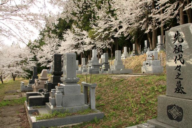高城長禅寺の桜_a0267861_19452668.jpg