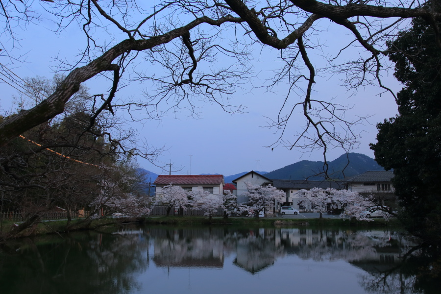 桜 2014 丹波                   _f0021869_21422681.jpg