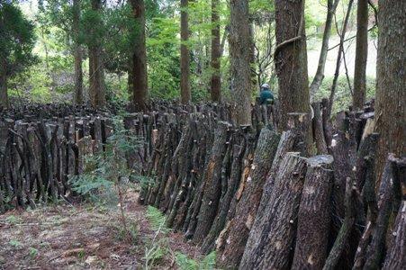 阿蘇小国町森林ツアーに行ってきました。vol.1_b0112371_15142613.jpg