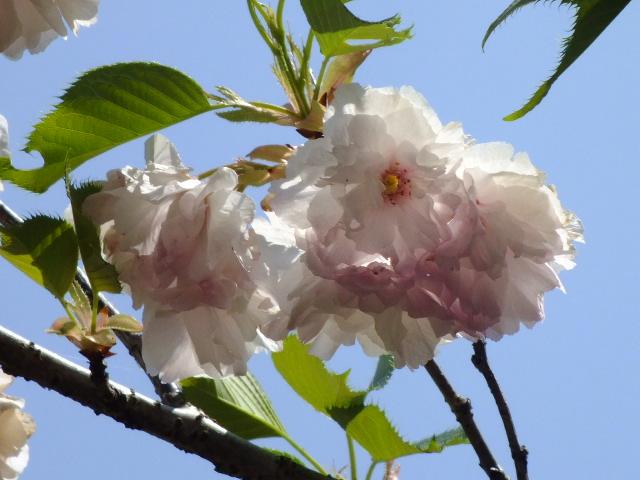 4月25日 多摩森林科学園_e0145782_17201212.jpg