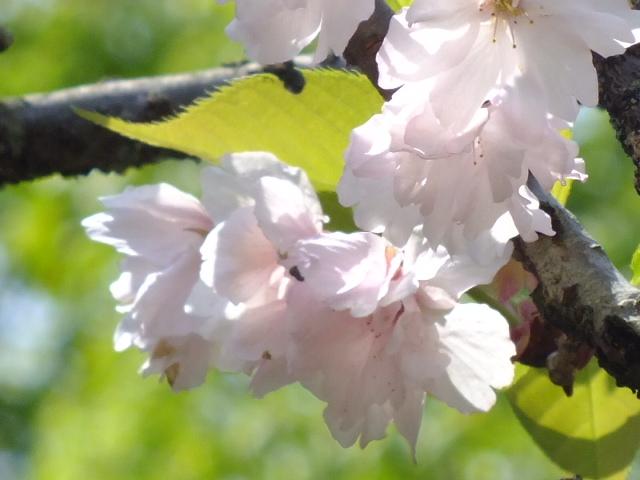 4月25日 多摩森林科学園_e0145782_17205520.jpg