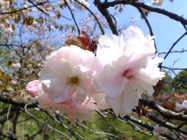 4月25日 多摩森林科学園_e0145782_17221767.jpg