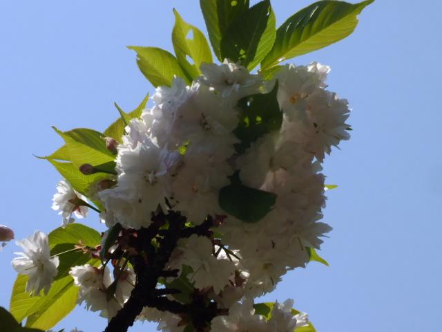 4月25日 多摩森林科学園_e0145782_17225839.jpg
