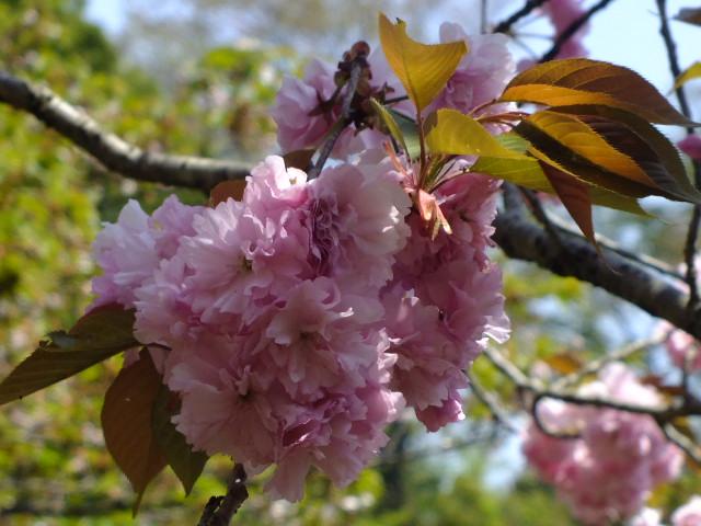 4月25日 多摩森林科学園_e0145782_17234043.jpg