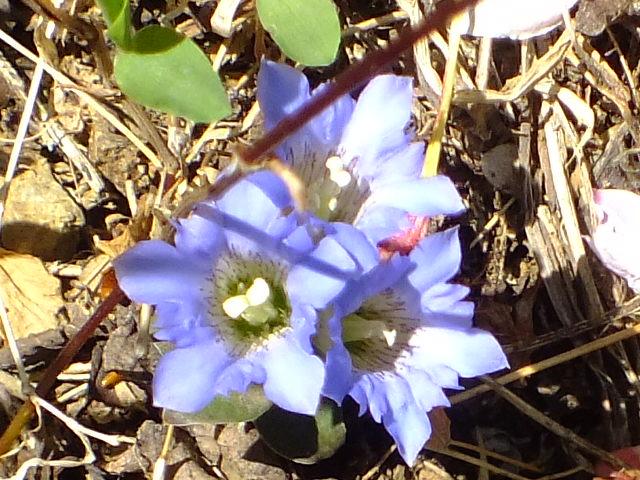 4月25日 多摩森林科学園_e0145782_17271572.jpg