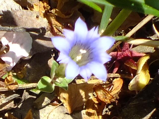4月25日 多摩森林科学園_e0145782_17274150.jpg