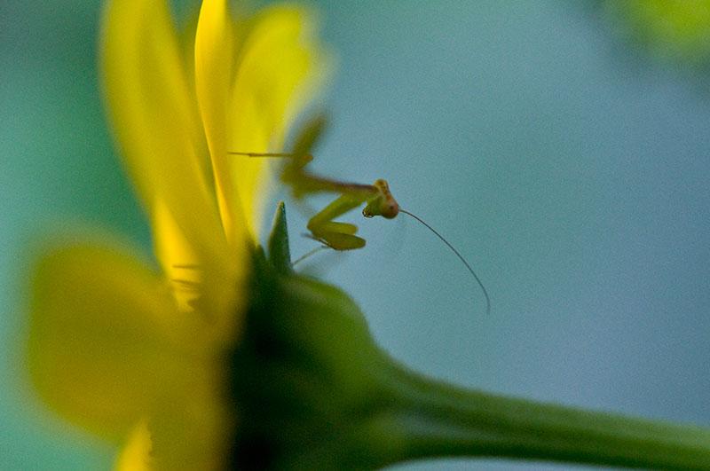 私設昆虫記 生存中-26_f0215695_2141461.jpg