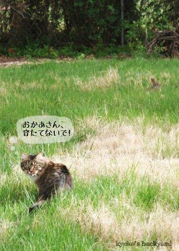 猫がウサギを追いかける季節_b0253205_1455580.jpg