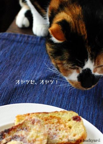 フレンチトーストを狙う猫_b0253205_1585327.jpg