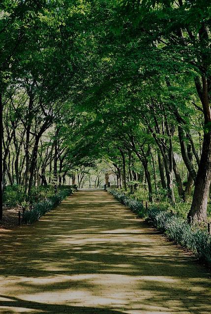 公園。_c0217406_16190636.jpg