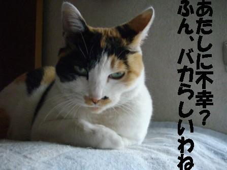 f0320408_22213500.jpg