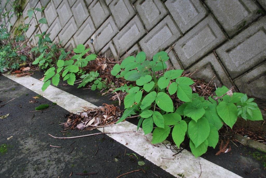 山菜_f0176521_21191566.jpg