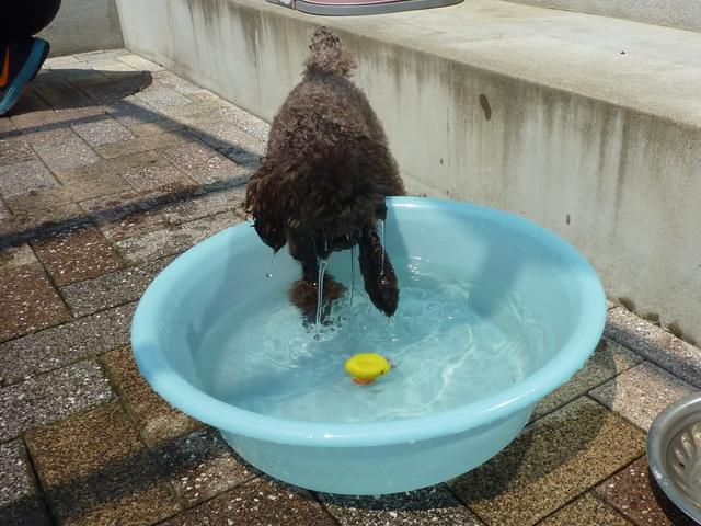 プリンの水遊び_f0032332_9254798.jpg