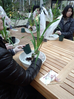 苔と植物の相性があるんです。 石河英作さん_c0103137_115450100.jpg