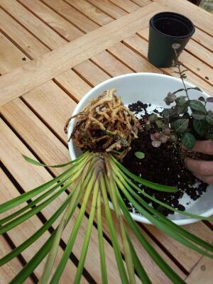 苔と植物の相性があるんです。 石河英作さん_c0103137_11563979.jpg