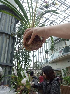 苔と植物の相性があるんです。 石河英作さん_c0103137_1223368.jpg