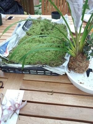 苔と植物の相性があるんです。 石河英作さん_c0103137_1243322.jpg
