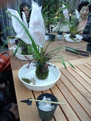 苔と植物の相性があるんです。 石河英作さん_c0103137_1281436.jpg