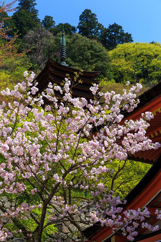 春・談山神社の花々_f0155048_1134044.jpg