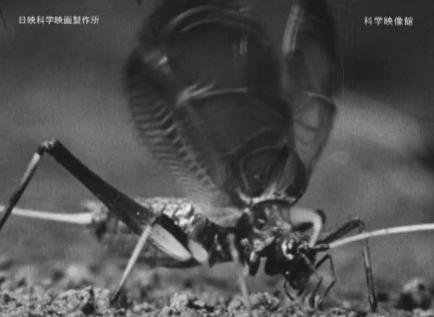 「すず虫」を仮配信_b0115553_13323156.png
