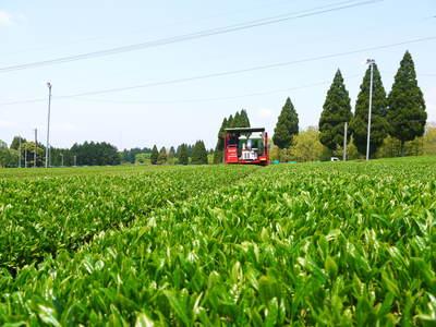 菊池水源茶 新芽の芽吹きと寒冷紗かけ!まもなくお茶摘みです!!_a0254656_17552278.jpg