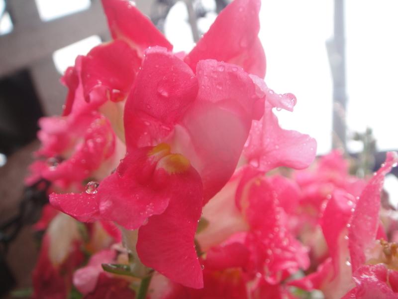 雨の日は休養日_c0108460_14280645.jpg