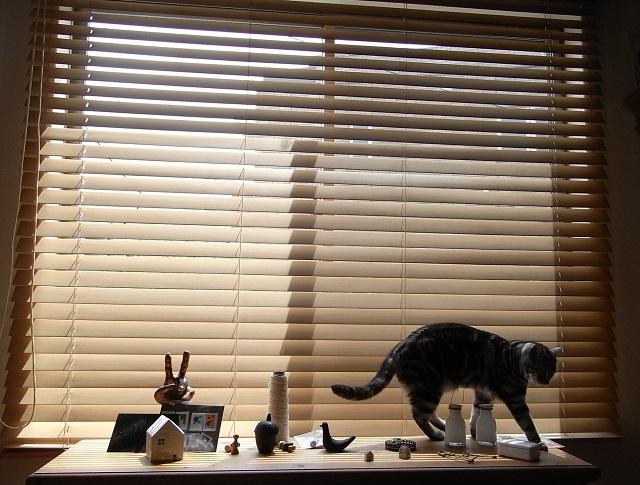 猫      (一休み中・・・)_d0105967_15255069.jpg