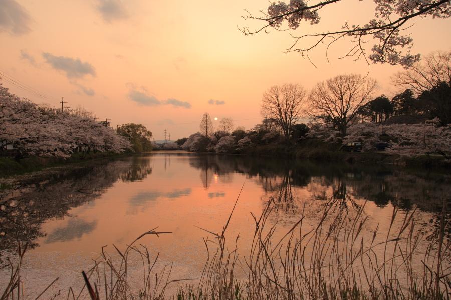 桜 2014 丹波                   _f0021869_23403596.jpg