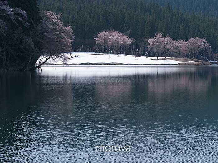 中子の桜_c0085877_7381860.jpg