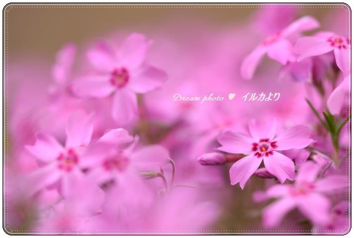 f0304384_206226.jpg