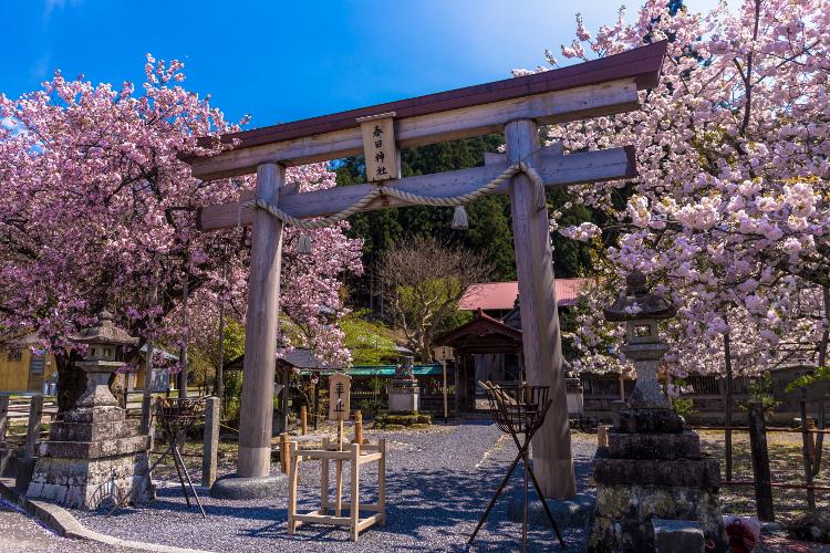 黒田百年桜_e0051888_1763875.jpg