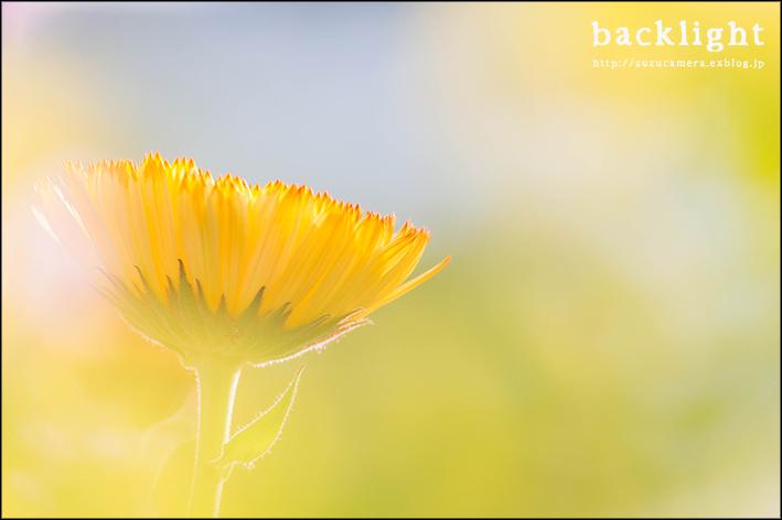 花と逆光_f0100215_22490567.jpg