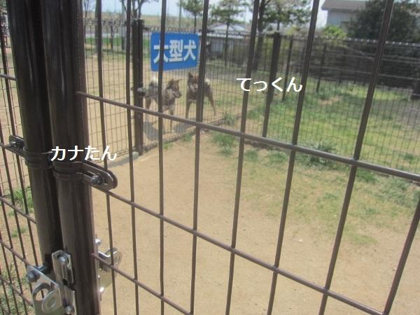 f0143123_19084221.jpg