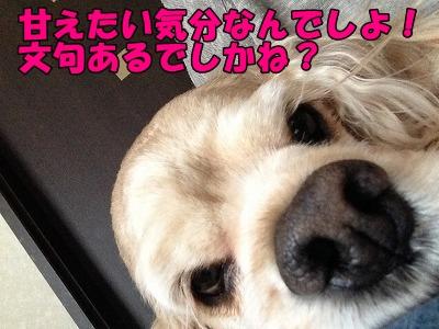 f0326925_22201380.jpg