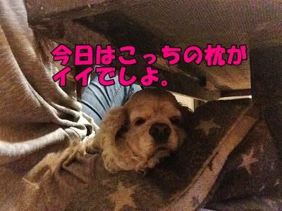 f0326925_22202743.jpg