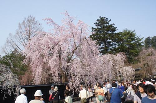 桜の時期の角館_d0004728_11240325.jpg