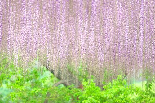 Flower Park  ・・・ふじのはな・・・_f0333031_10022279.jpg