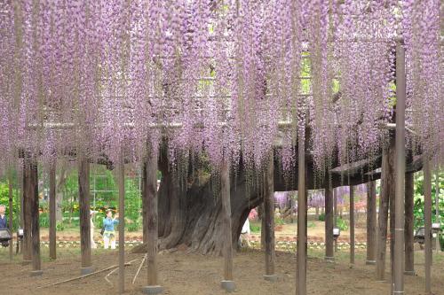 Flower Park  ・・・ふじのはな・・・_f0333031_10031856.jpg