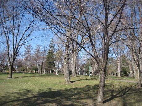 GW何処へも行けないので公園を散歩_a0279743_15285731.jpg