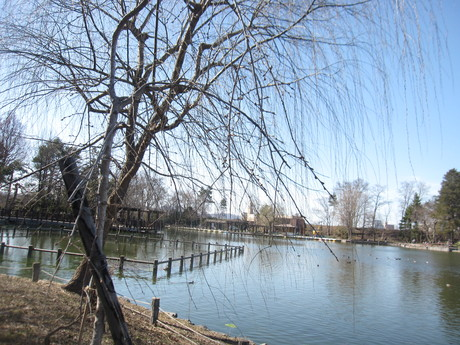 GW何処へも行けないので公園を散歩_a0279743_15304652.jpg