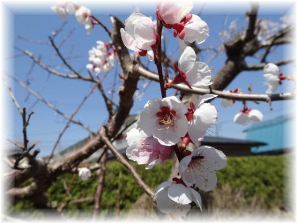 ☆庭の花_d0165645_2136104.jpg