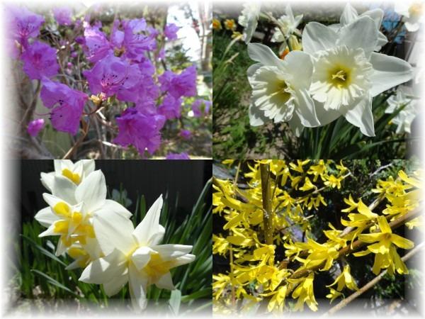 ☆庭の花_d0165645_21365484.jpg