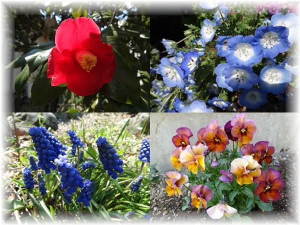 ☆庭の花_d0165645_21373794.jpg