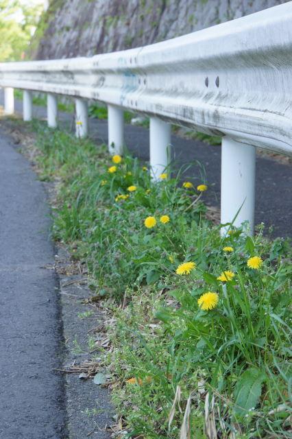 田舎道のお散歩_a0257652_16331719.jpg