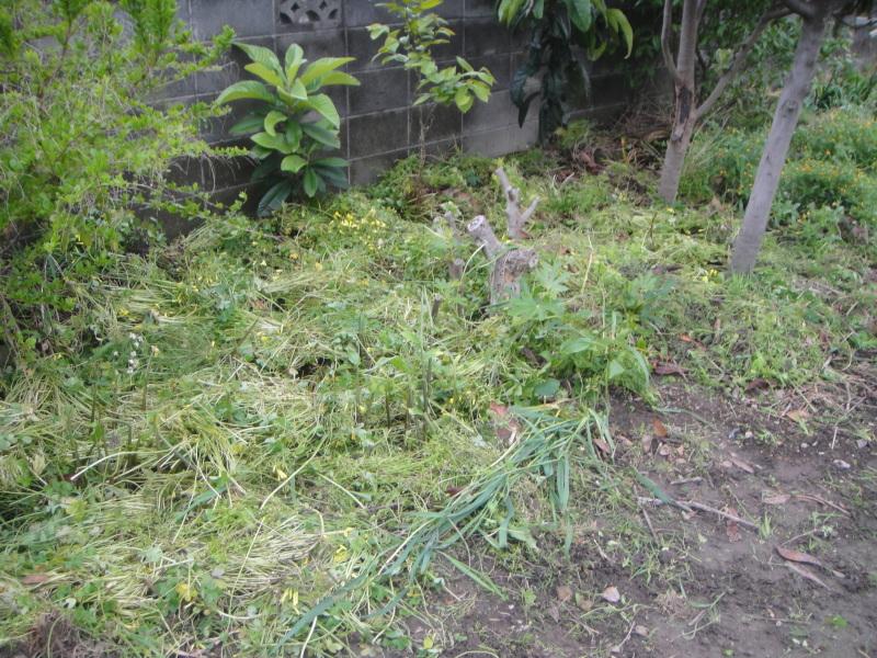 夏野菜の支柱立て_c0108460_20523440.jpg