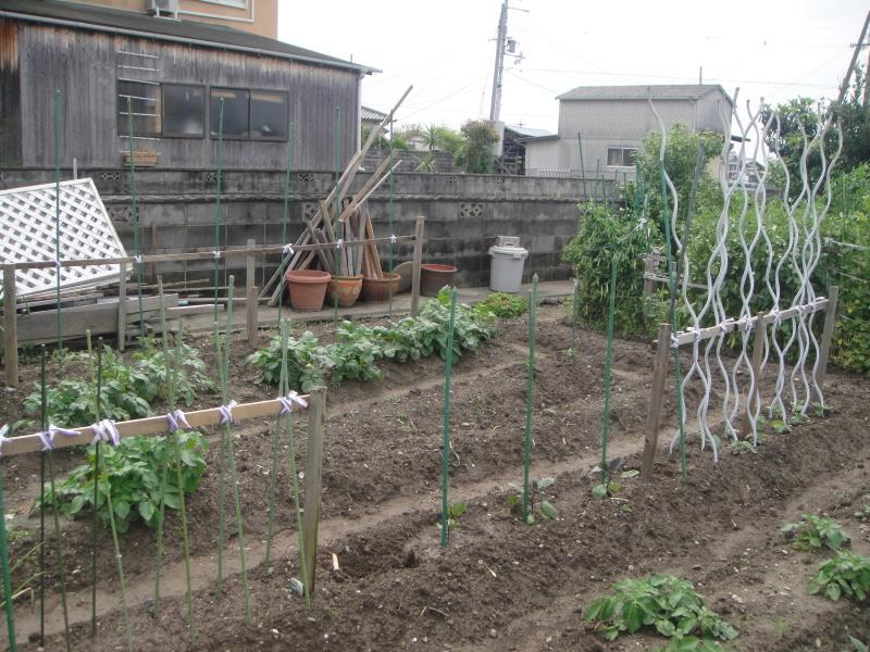 夏野菜の支柱立て_c0108460_20523604.jpg