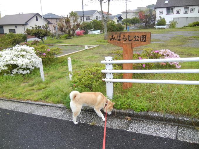 '14,4,30(水)雨なのでお寝坊愛ちゃん!_f0060461_9364947.jpg