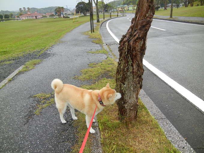 '14,4,30(水)雨なのでお寝坊愛ちゃん!_f0060461_9384876.jpg