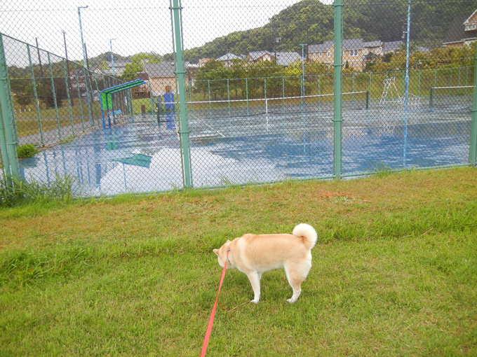 '14,4,30(水)雨なのでお寝坊愛ちゃん!_f0060461_9392975.jpg